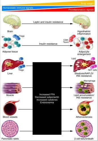 Hypothalamic Immune signaling