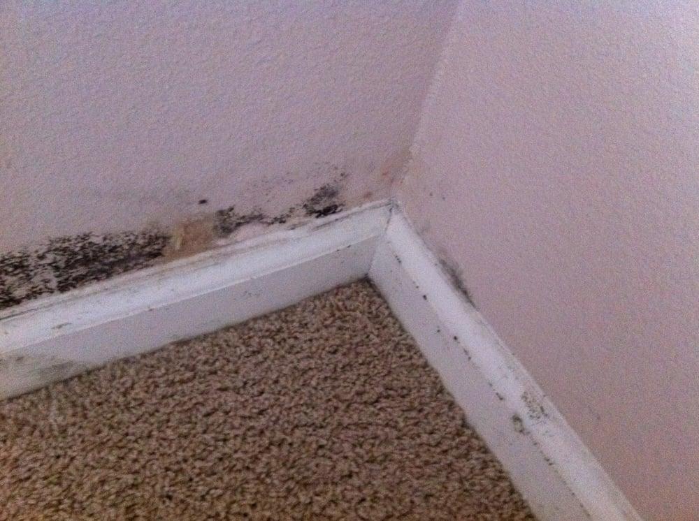 aspergillus mold in home